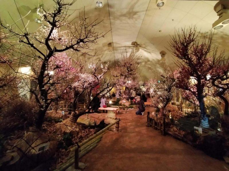 名城公園梅まつり