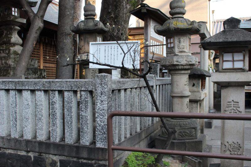 浅間神社の梅の木
