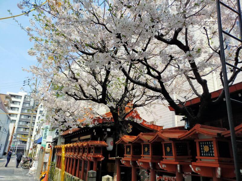 那古野の桜